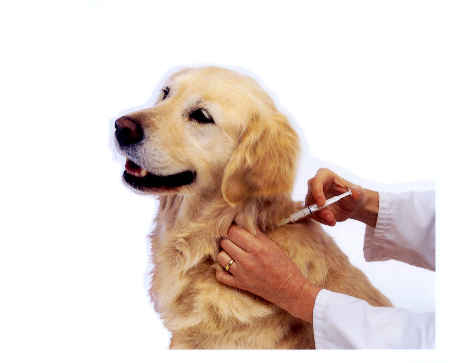dog_being_vaccinated